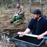 Två män mäter fisk som tagits upp ur bäcken. Foto: Eva Nevelius